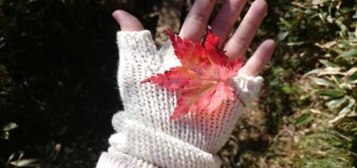 Gloved hand holding leaf