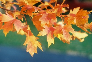 fall-leaves-transitions