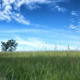 pasture-trees